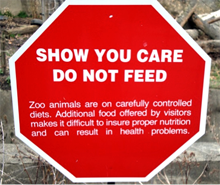 Don't feed the lions!